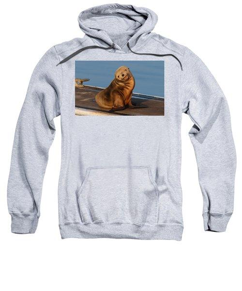 Shy Sea Lion Pup  Sweatshirt