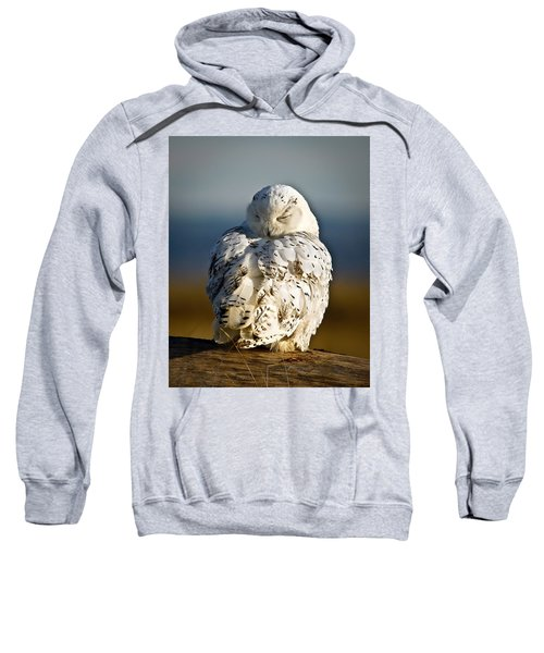 Sleeping Snowy Owl Sweatshirt
