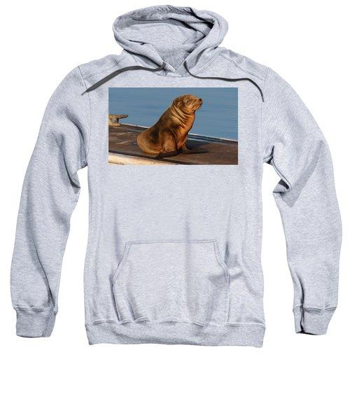 Sleeping Wild Sea Lion Pup  Sweatshirt