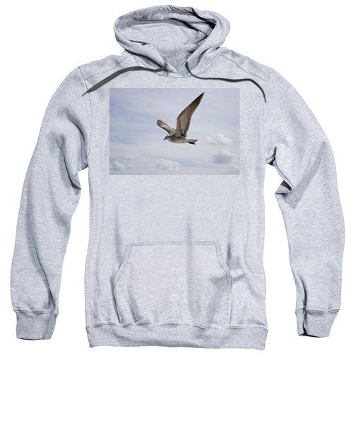 Soaring Gull Sweatshirt