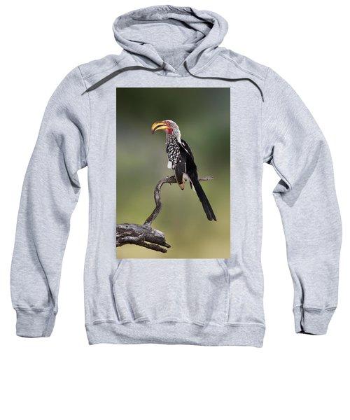 Southern Yellowbilled Hornbill Sweatshirt