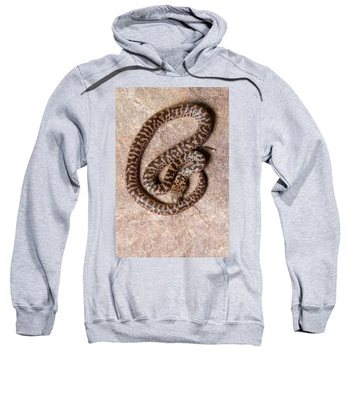 Spotted Python Antaresia Maculosa Top Sweatshirt