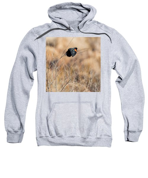 Springtime Song Square Sweatshirt by Bill Wakeley