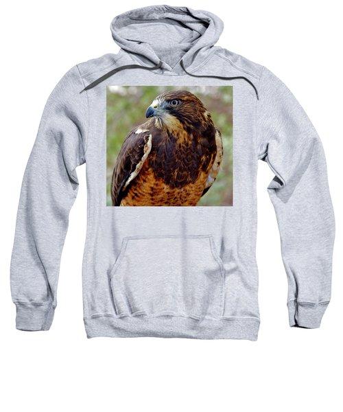 Swainson's Hawk Sweatshirt