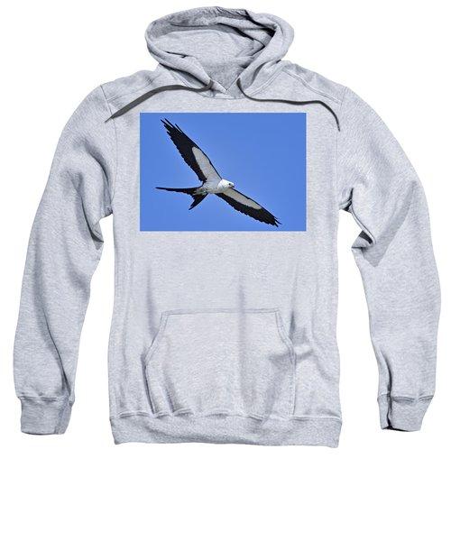 Swallow-tailed Kite Sweatshirt