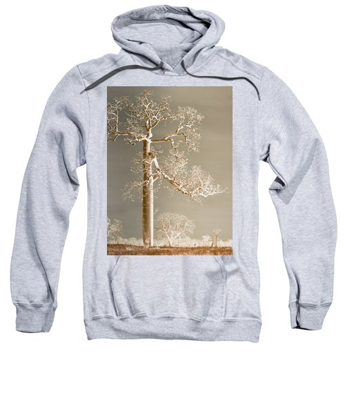 The Dreaming Tree Sweatshirt