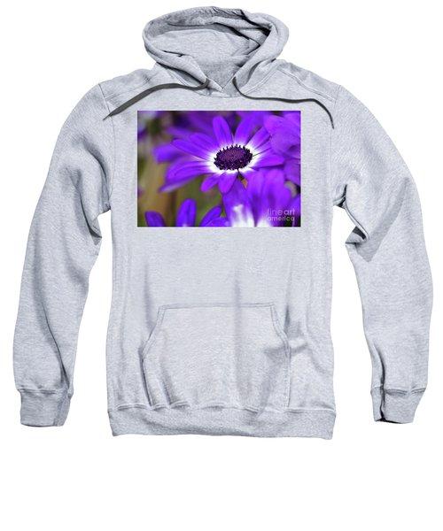 The Purple Daisy Sweatshirt