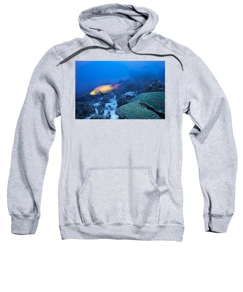 The Spanish Hog Snapper Sweatshirt