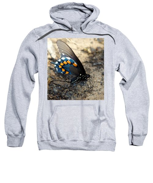Sweatshirt featuring the photograph The Spicebush Swallowtail Papilio Troilus by Kim Pate