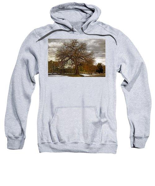 The Welcome Tree Sweatshirt