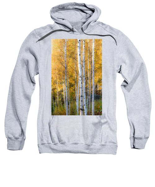 Thin Birches Sweatshirt