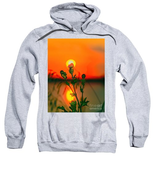 Thistle At Sunset Sweatshirt