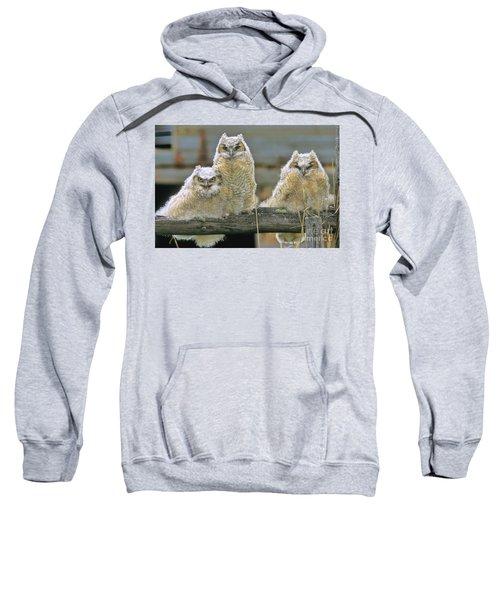 Three Great-horned Owl Chicks Sweatshirt