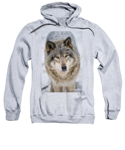 Timber Wolf Pictures 254 Sweatshirt