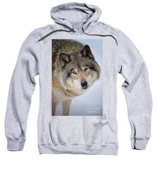 Timber Wolf Pictures 255 Sweatshirt