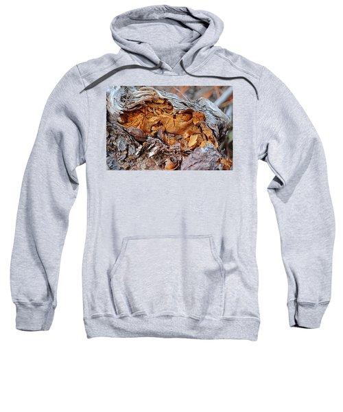 Torn Old Log Sweatshirt