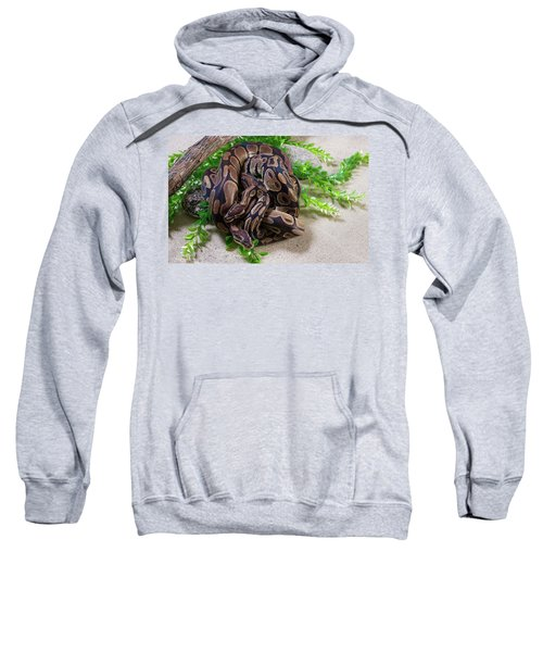 Two Burmese Pythons Python Bivittatus Sweatshirt