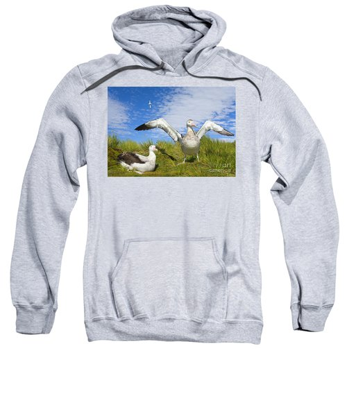 Wandering Albatross Courting  Sweatshirt by Yva Momatiuk John Eastcott