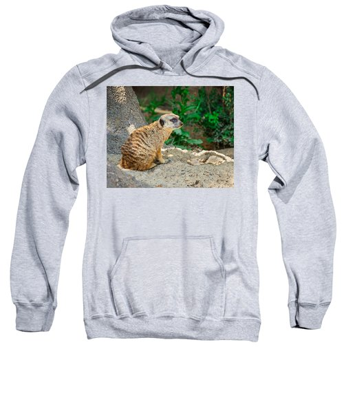 Watchful Meerkat Sweatshirt by Jon Woodhams
