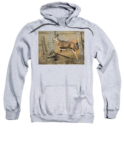 What Fence Sweatshirt