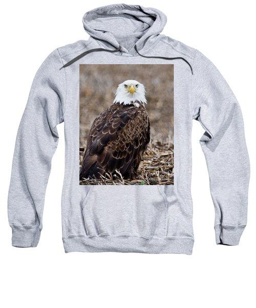 What Sweatshirt