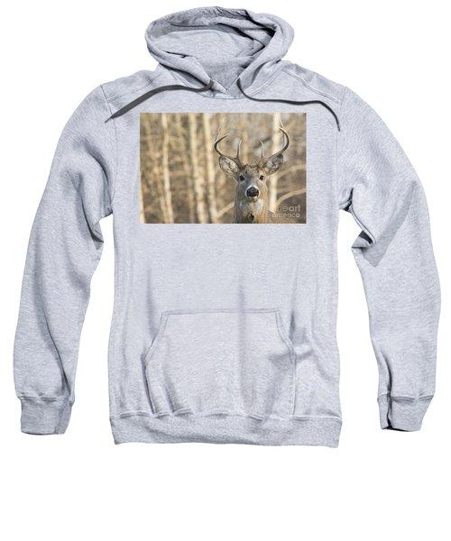White-tailed Buck Sweatshirt