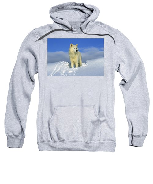 White Wolf In The Snow Idaho Sweatshirt