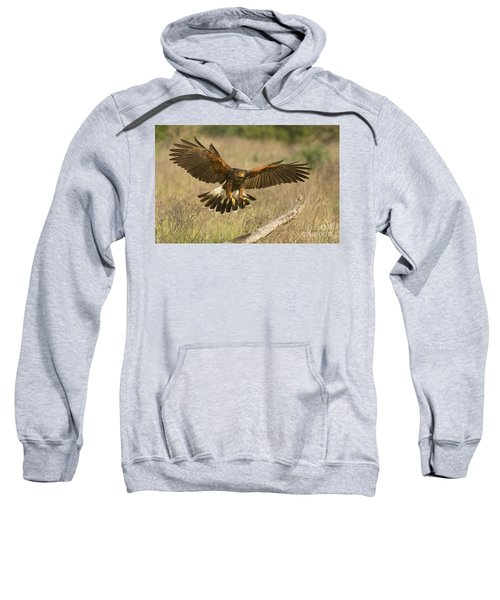 Wild Harris Hawk Landing Sweatshirt