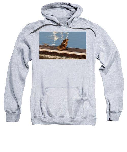 Wild Pup Sun Bathing Sweatshirt