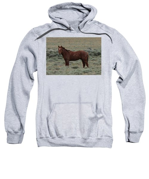 Wild Scars Sweatshirt