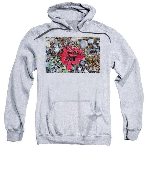 Wild Strawberry Sweatshirt