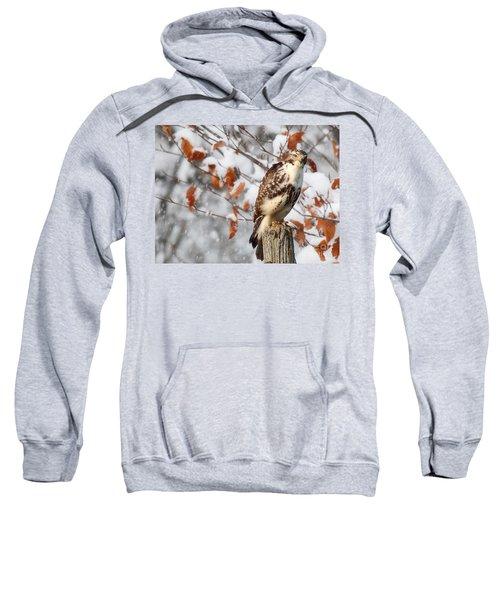 Winter Visitor  Sweatshirt