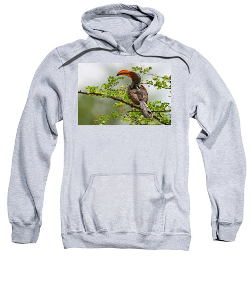 Yellow-billed Hornbill Sweatshirt