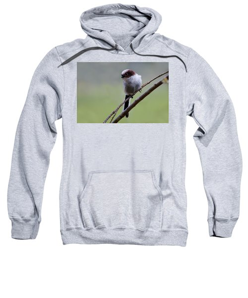 Long Tailed Tit Sweatshirt