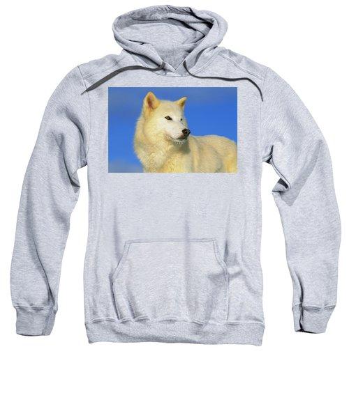 Arctic Wolf Canis Lupus Portrait Sweatshirt
