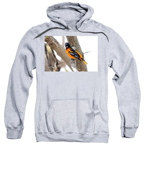 Baltimore Orioles Sweatshirt