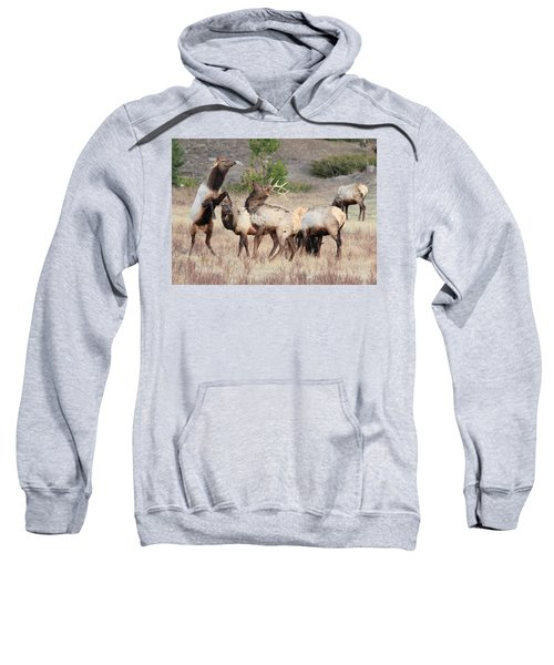 Boxing Match Sweatshirt