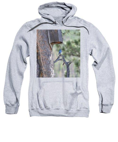 Boy Blue Sweatshirt