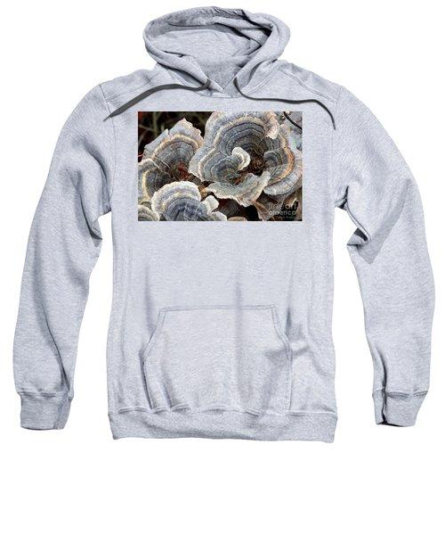 Concentric Sweatshirt