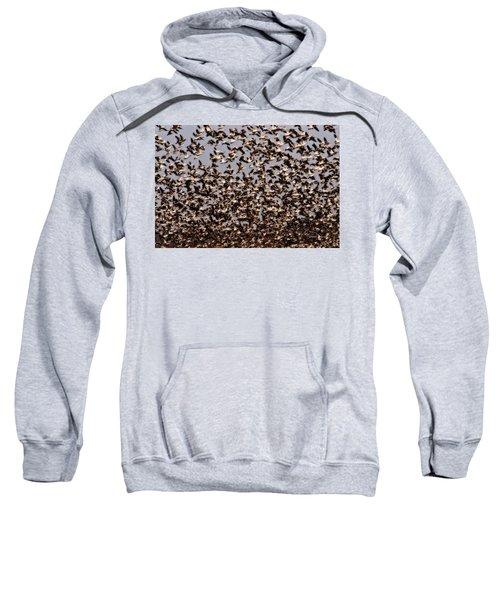 Duck Wall Sweatshirt