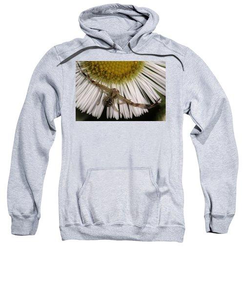 Flower Spider On Fleabane Sweatshirt