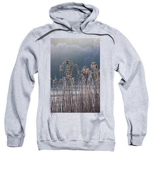 Frozen Reeds At The Shore Of A Lake Sweatshirt