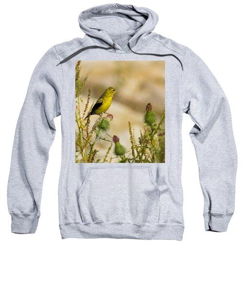 Goldfinch On Lookout Sweatshirt by Bill Pevlor