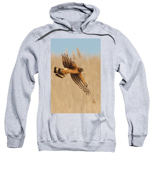 Harrier Over Golden Grass Sweatshirt