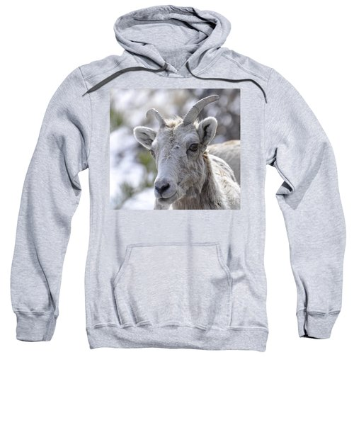 How Close Is Too Close Sweatshirt