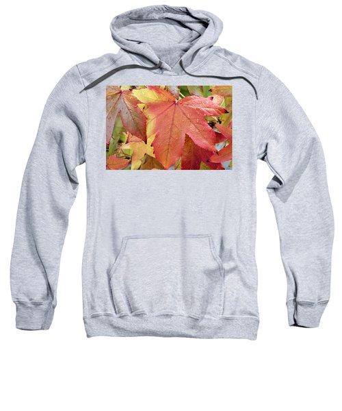 Liquidambar Leaves In Autumn Sweatshirt
