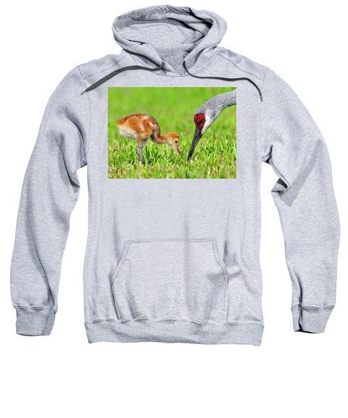 Looking For Bugs Sweatshirt
