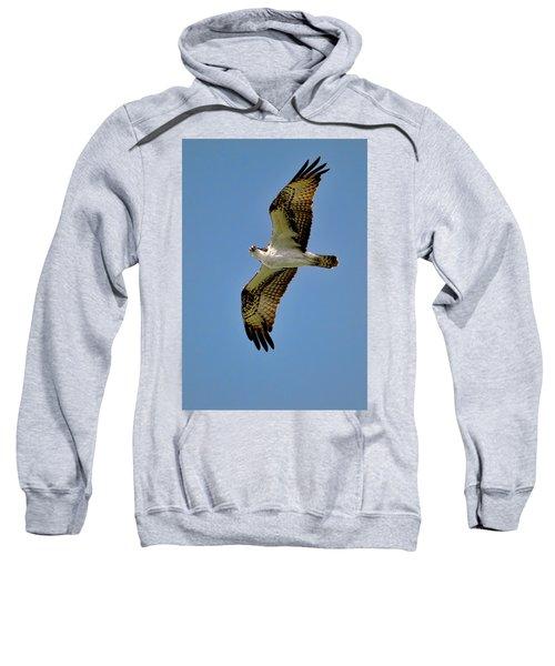 Osprey Above Sweatshirt