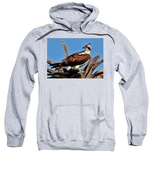 Osprey On A Windy Morning Sweatshirt