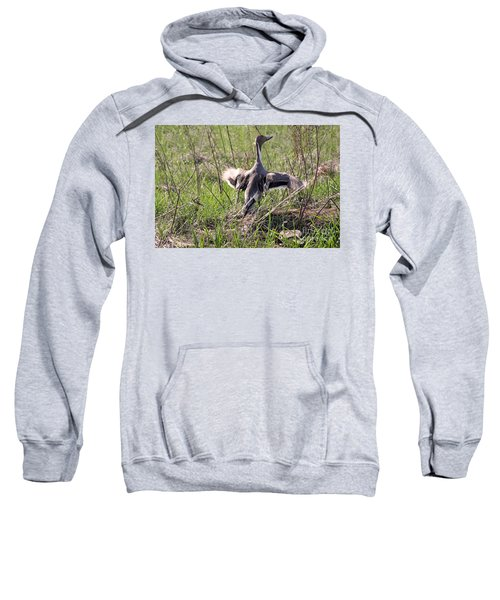 Pintail Duck Sweatshirt